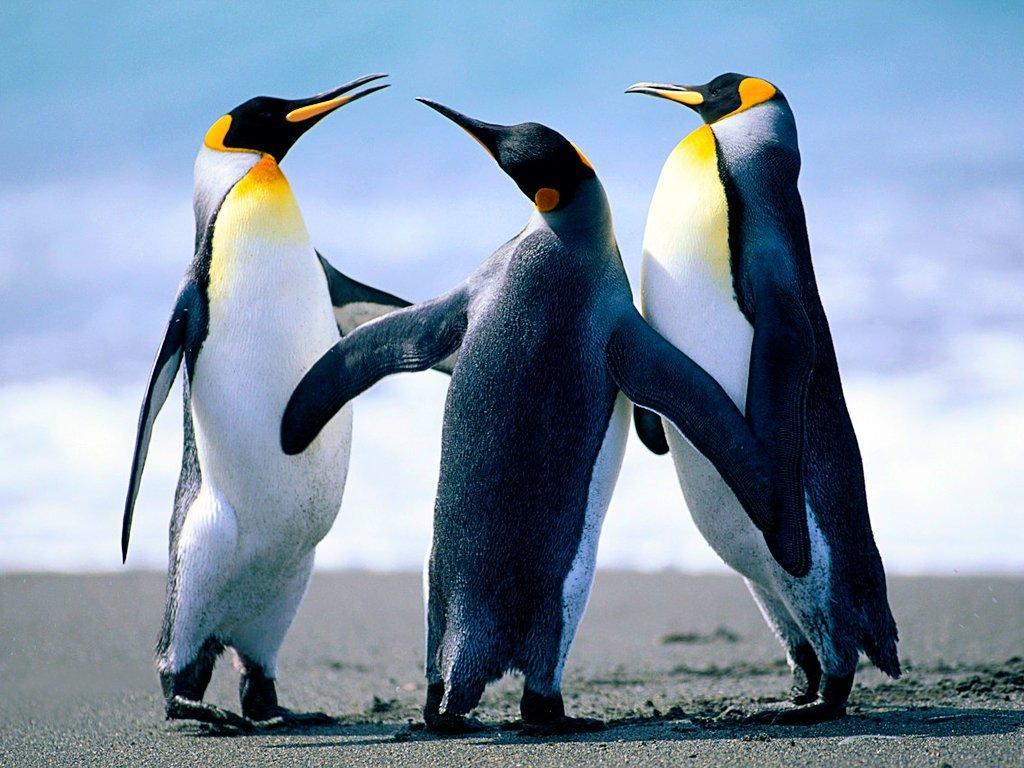 Click image for larger version  Name:Penguins.jpg Views:16 Size:759.6 KB ID:471873