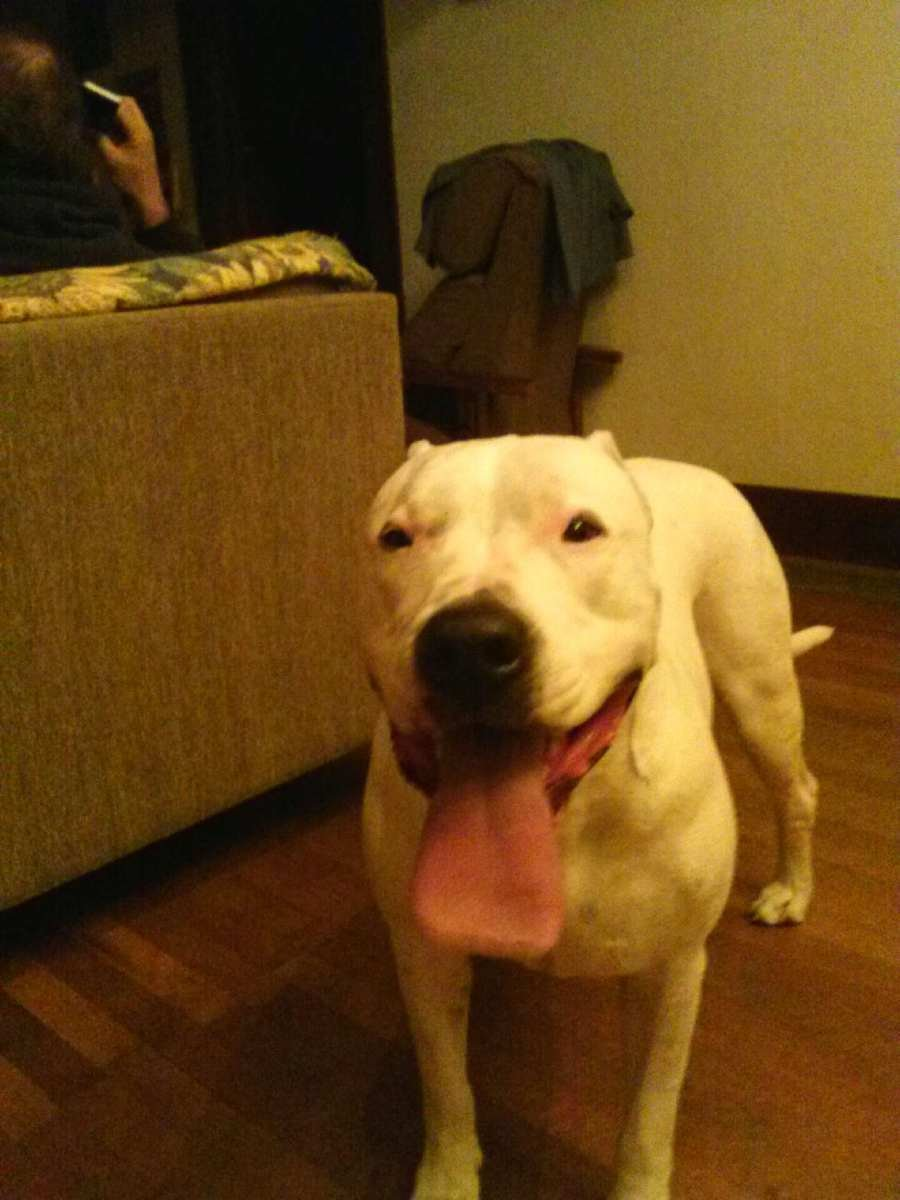 Click image for larger version  Name:tyson dog.jpg Views:12 Size:74.1 KB ID:555008
